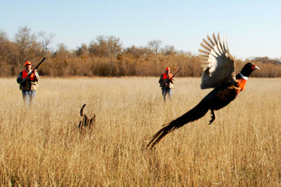 "Ring-necked pheasants abound in what Outdoor Life calls ""The best place to live your outdoor dream."